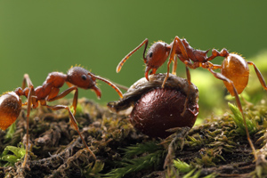 Ant Plants of Virginia logo